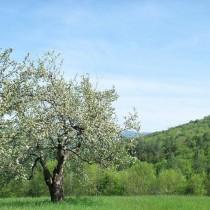 Photo of Vermont's trees