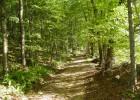 Hike/Walk